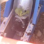 Рассадопосадочные машины для растений в кубиках Рассадопосадочная машина Ferrari F