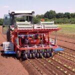 Рассадопосадочные машины для растений в кубиках Полуавтоматическая рассадопосадочная машина Ferrari ROTOSTRAPP