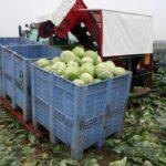 Комбайны Навесной 1-рядный комбайн для уборки капусты VANHOUCKE, 1 (3) контейнерный