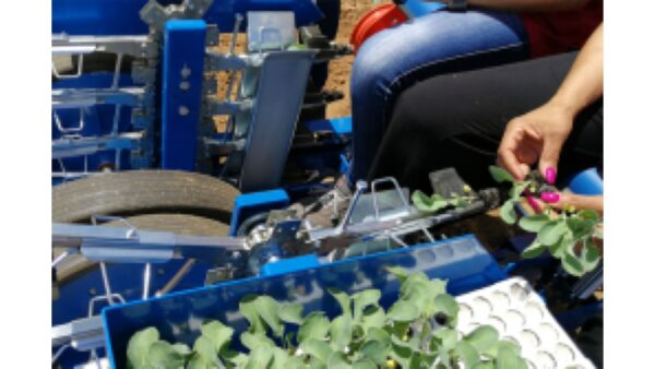 Рассадопосадочные машины для растений с голым корнем Рассадопосадочная машина Ferrari  FPP MAXI