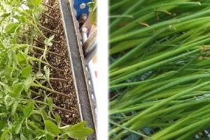 Рассадопосадочные машины для растений в кассетах