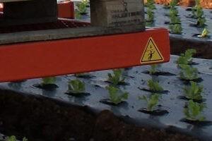 Рассадопосадочные машины для мульчирующего посева
