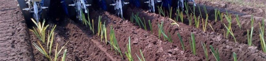 Рассадопосадочные машины для растений с голым корнем