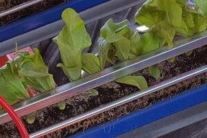 Рассадопосадочные машины для растений в кубиках